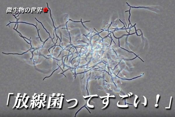 放線菌ってすごい!」-1(ストレ...