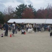 動物愛護フェアに参加…