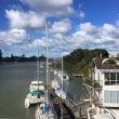 Auckland N…