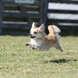 本日、飛行犬撮影会