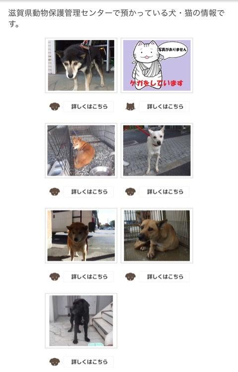 滋賀 県 動物 保護 管理 センター
