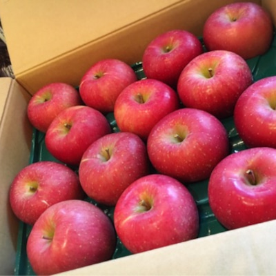 若林 順子さんから、ワンワンレスキューのわんちゃん達へ大きく立派な、おリンゴが届の記事に添付されている画像