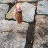 レアな魚を釣っちゃいました(笑)の画像