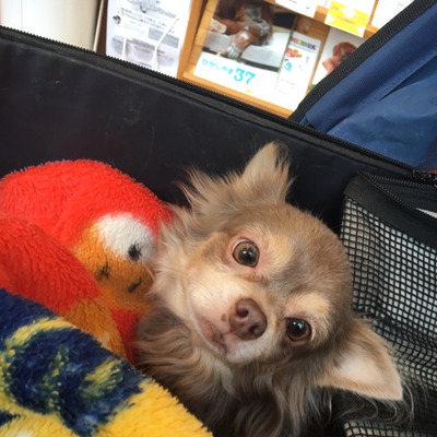 生涯飼育保護犬の福助君は栄どうぶつ病院で、お爪きりの記事に添付されている画像