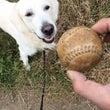 ボール探知犬