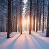 「立冬」の画像