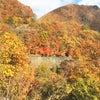 そろそろ見ごろな紅葉です~栃木~の画像