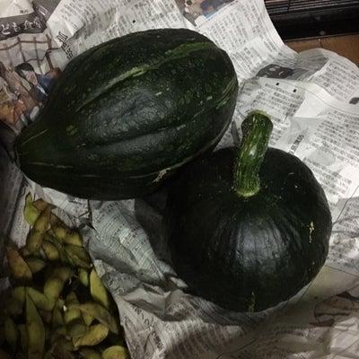 かぼちゃの収穫の記事に添付されている画像