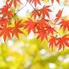 紅葉の季節!明石に行こう~★D-CUBE明石店の画像