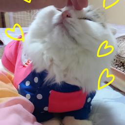 画像 猫の防寒にもお洋服! の記事より 4つ目