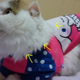 画像 猫の防寒にもお洋服! の記事より 2つ目