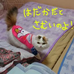 画像 猫の防寒にもお洋服! の記事より 1つ目