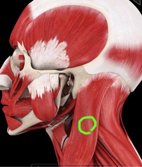 胸 更年期 痛み 障害 の