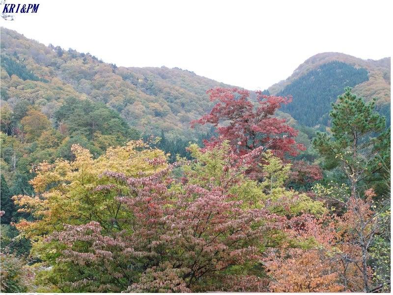 紅葉(白川郷)5
