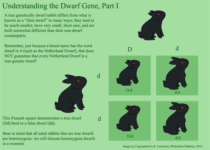 ミニウサギと呼ばれて true dwarfs false dwarfs living with