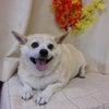 カット犬種のシャンプーは是非サロンで(^^♪の画像