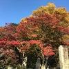 高尾山の紅葉♡の画像