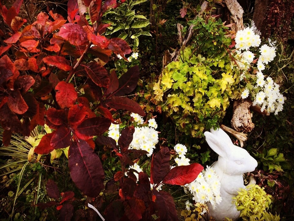 お花屋さんではなくガーデン屋さん・広島の小さなガーデン屋さんの記事より
