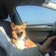ドライブドライブ♪