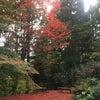 五色空間の情報便2016.11.18号 「最高のチカラ色は?」の画像