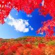 紅葉❤︎真木
