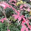 秋の深まりの画像