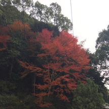 今日の境内紅葉とご縁…