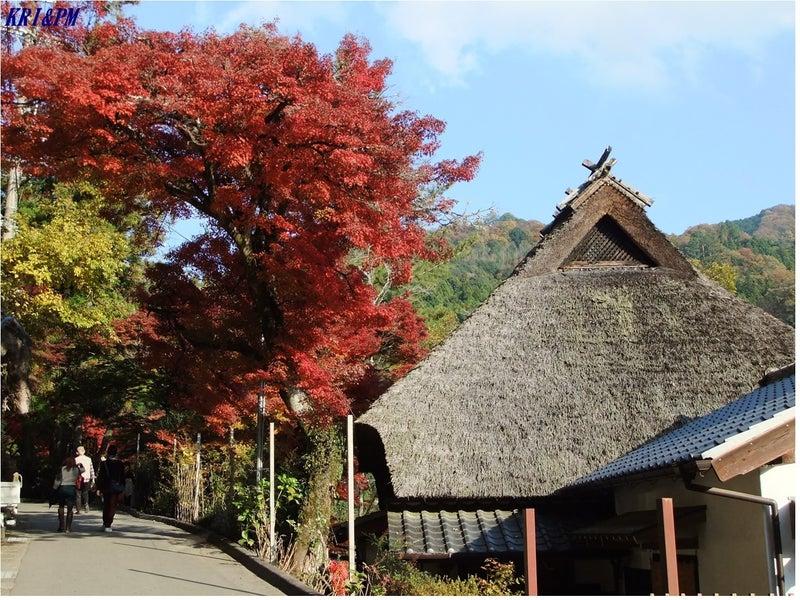 紅葉(香嵐渓)5
