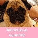 $ふがれす九州地区ブログ