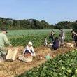 秋の恒例…芋掘り