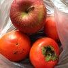 渋柿を甘くする方法の画像