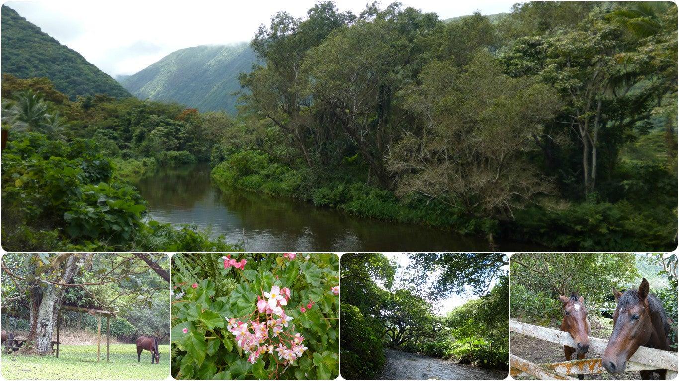ハワイ島ワイピオ渓谷2