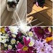 あきさんのお花と新鮮…