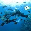 青の洞窟ダイビング、青の洞窟シュノーケルのテイクダイブ TAKE DIVEの画像