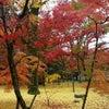 京都の紅葉綺麗だよねの画像