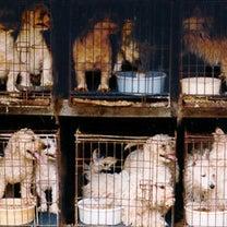 15回も出産させられる繁殖犬の記事に添付されている画像