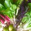 協生農法の野菜たちの画像