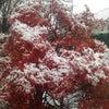 東京初雪!の画像