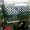 雪降ってます!の画像