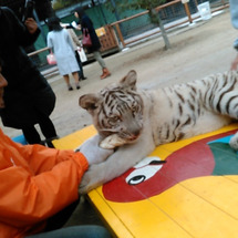 動物園のコト
