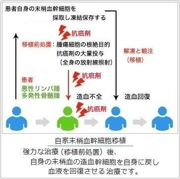 自家末梢血幹細胞移植のプロセス