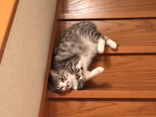 階段を流れ落ちてくる猫