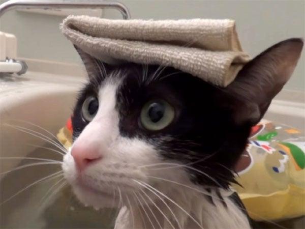 お風呂に浸かっている猫