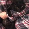 抱っこで寝落ちの黒猫❤︎カンタの画像