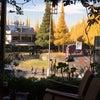 青山イチョウ並木の画像