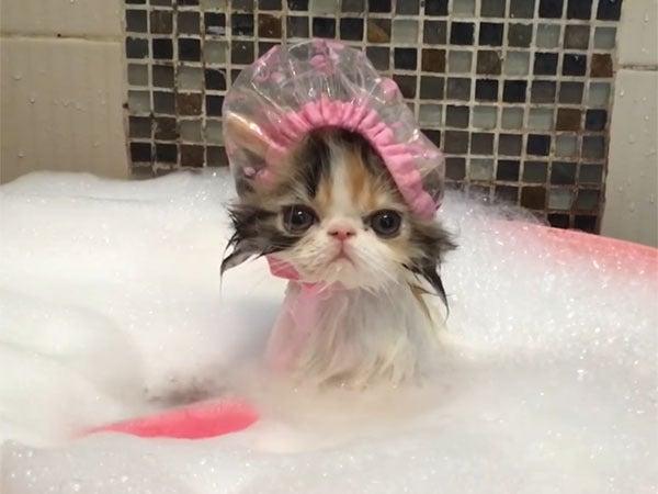 子猫の可愛いバスタイム♪