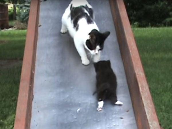 滑り台からスベり落ちる子猫を救う母猫