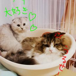 画像 最近の猫ベット の記事より
