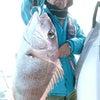 高級魚五目釣りの画像