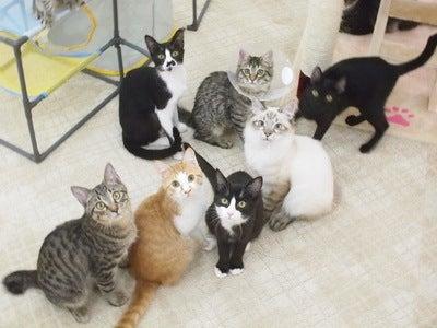 「にゃんくる」蒲田店の保護猫たち